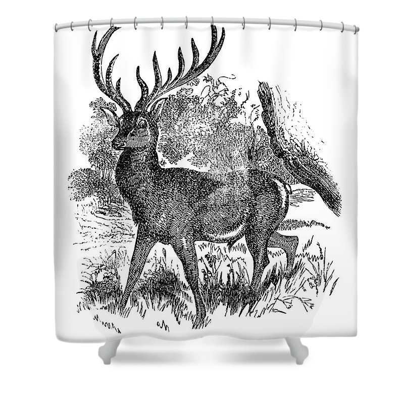 Engraving Shower Curtain featuring the digital art Red Deer Stag Engraving by Nnehring