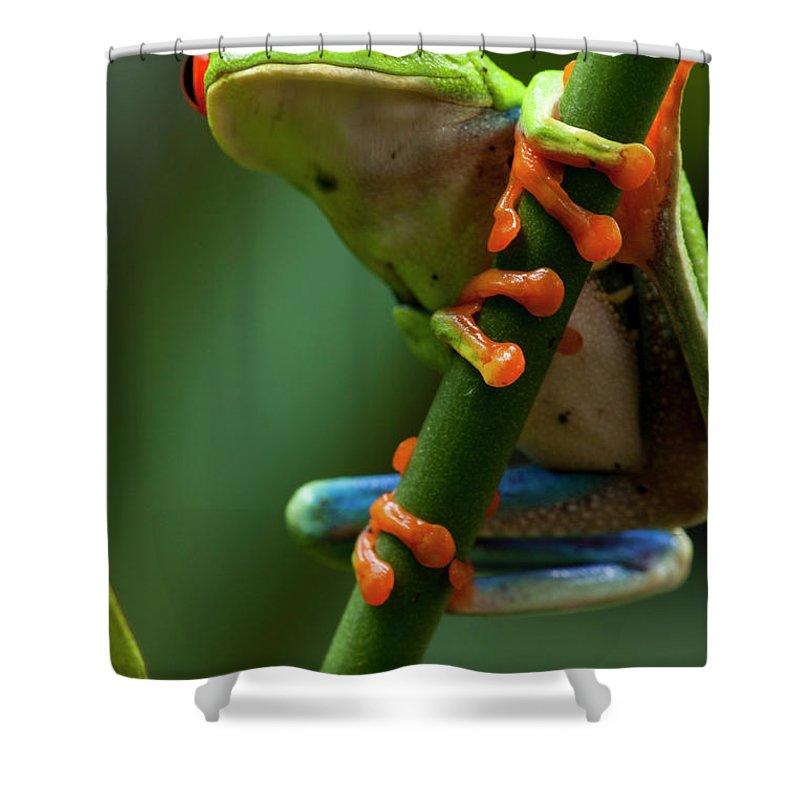 One Animal Shower Curtain featuring the photograph Red-eyed Tree Frog, Costa Rica by Paul Souders