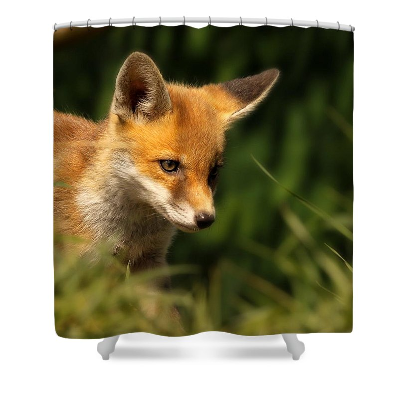 Alertness Shower Curtain featuring the photograph Red Fox Cub In The Grass by Chris Jolley