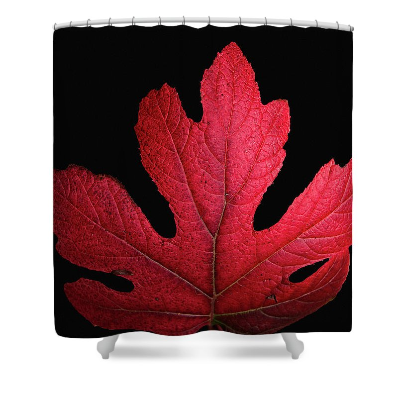 Red Shower Curtain featuring the photograph Red Leaf Art by Donald Spencer