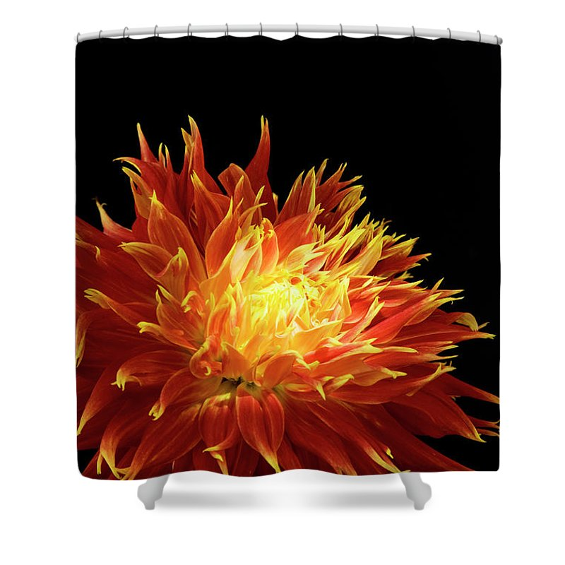 Firework Display Shower Curtain featuring the photograph Red-yellow Dahlia Flower by Eyepix