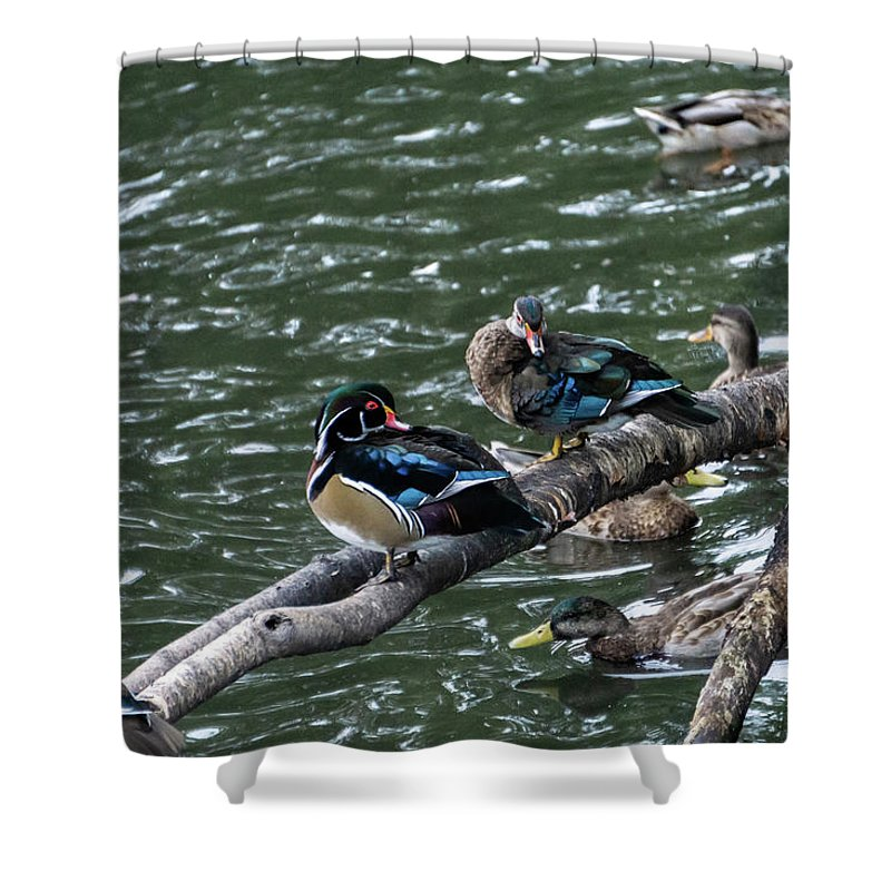 Water Birds Shower Curtains
