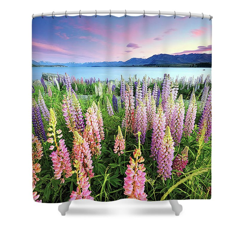 Tranquility Shower Curtain featuring the photograph Russel Lupines At Lake Tekapo by Atomiczen