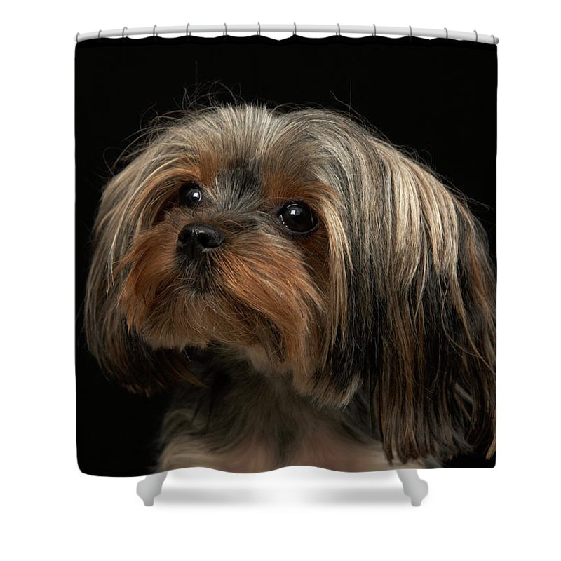Pets Shower Curtain featuring the photograph Sad Yorking Face Looking To The Left by M Photo