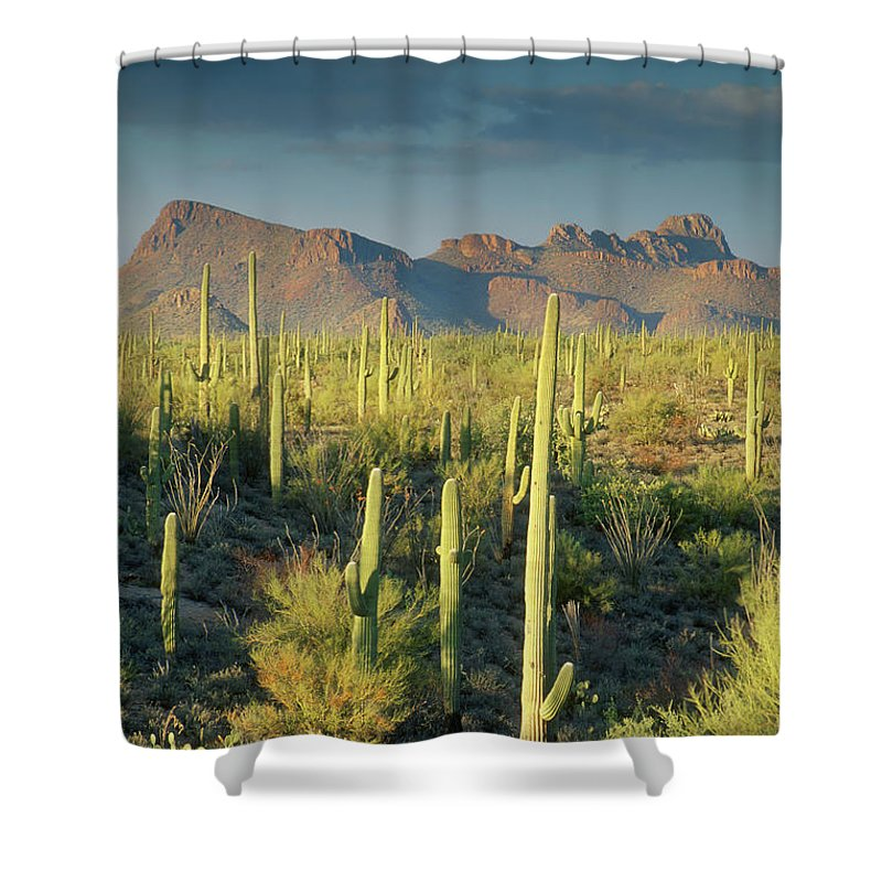 Saguaro Cactus Shower Curtain featuring the photograph Saguaro Cactus In Sonoran Desert And by Kencanning
