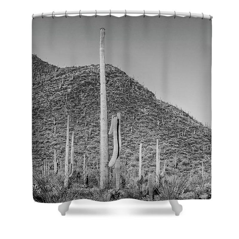 American West Shower Curtain featuring the photograph Saguaro National Park Scenic Impression - Monochrome by Melanie Viola