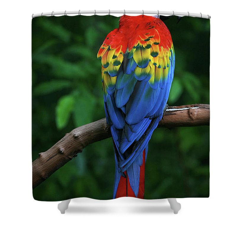 Tropical Rainforest Shower Curtain featuring the photograph Scarlet Macaw by Thepalmer