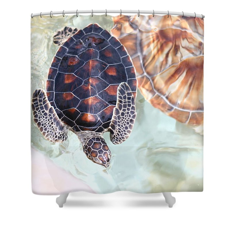 Underwater Shower Curtain featuring the photograph Sea Turtle by Alyssa B. Young