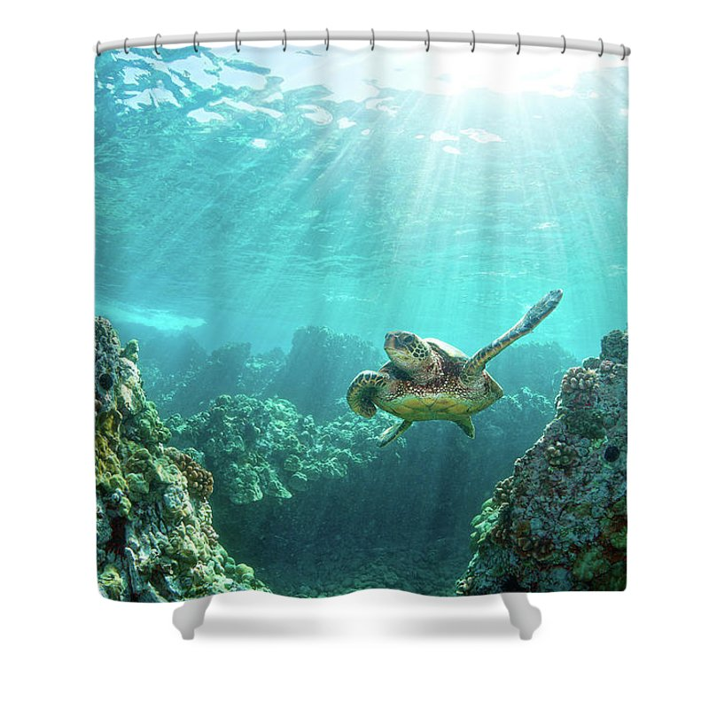 Underwater Shower Curtain featuring the photograph Sea Turtle Coral Reef by M.m. Sweet