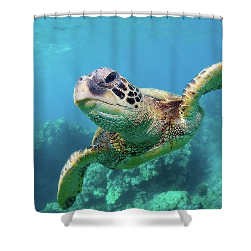 Underwater Shower Curtain featuring the photograph Sea Turtle, Hawaii by M Swiet Productions