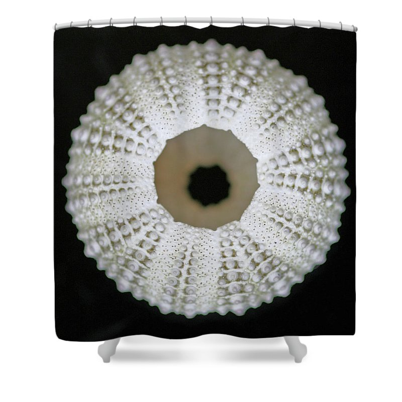 Empty Shower Curtain featuring the photograph Sea Urchin Shell by Photo By Jenny Walker.