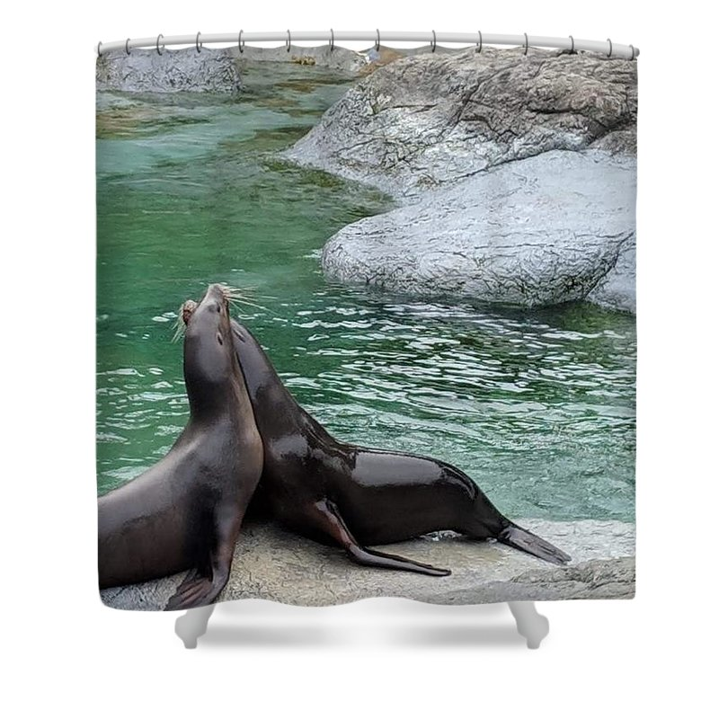 Blue Shower Curtain featuring the photograph Seal by Aswini Moraikat Surendran