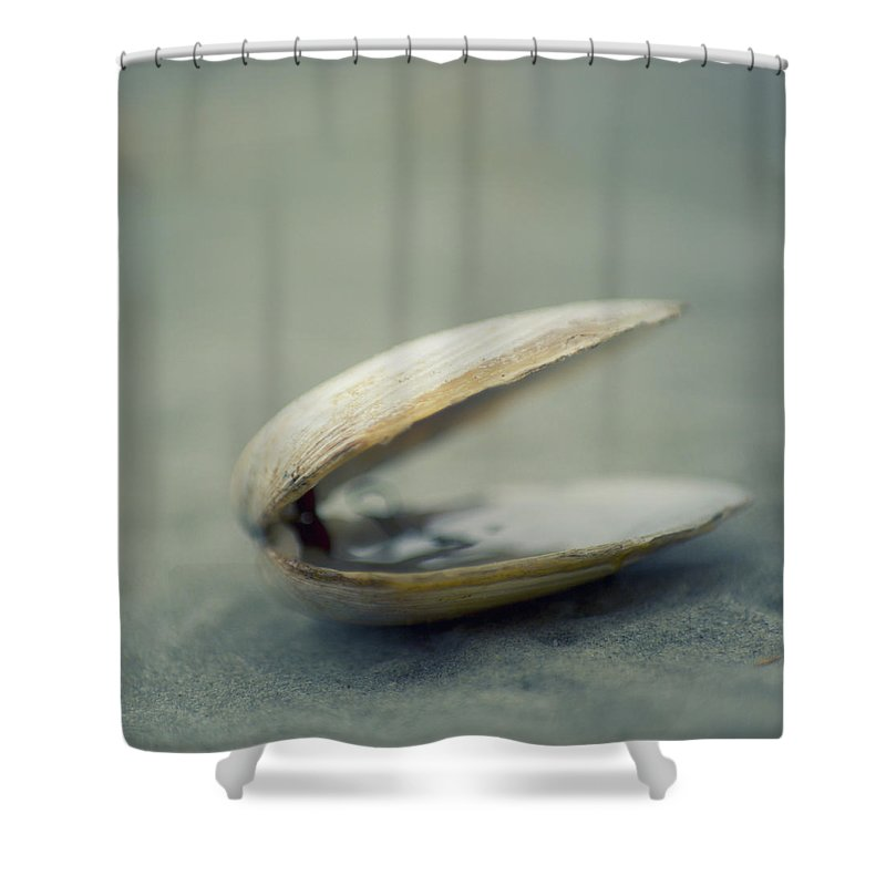 Animal Shell Shower Curtain featuring the photograph Shell by Jill Ferry Photography