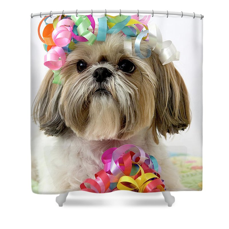 Pets Shower Curtain featuring the photograph Shih Tzu Dog by Geri Lavrov