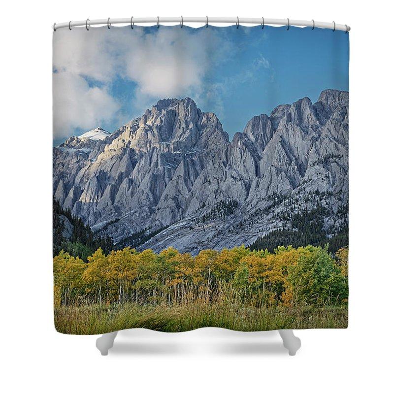 Poplars Shower Curtain featuring the photograph Shining Poplars by Dan Jurak