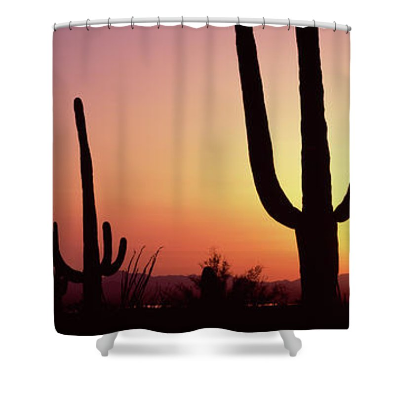 Photography Shower Curtain featuring the photograph Silhouette Of Saguaro Cacti Carnegiea by Panoramic Images