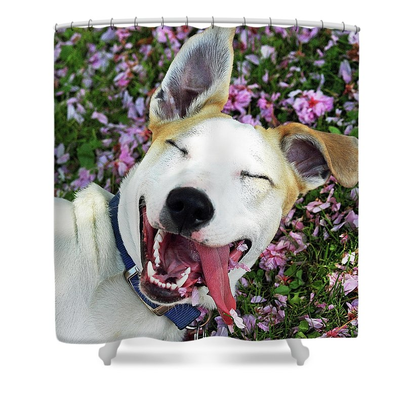 Pets Shower Curtain featuring the photograph Smiling Dog by Fork