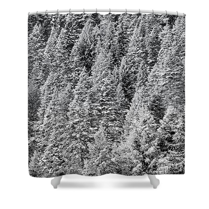 Abstract Shower Curtain featuring the photograph Snow On Evergreens by Tom Gresham