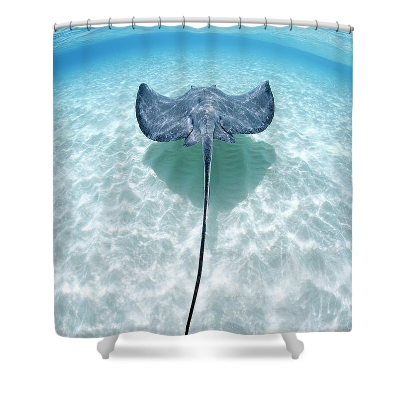 Underwater Shower Curtain featuring the photograph Southern Stingray Cayman Islands by Justin Lewis