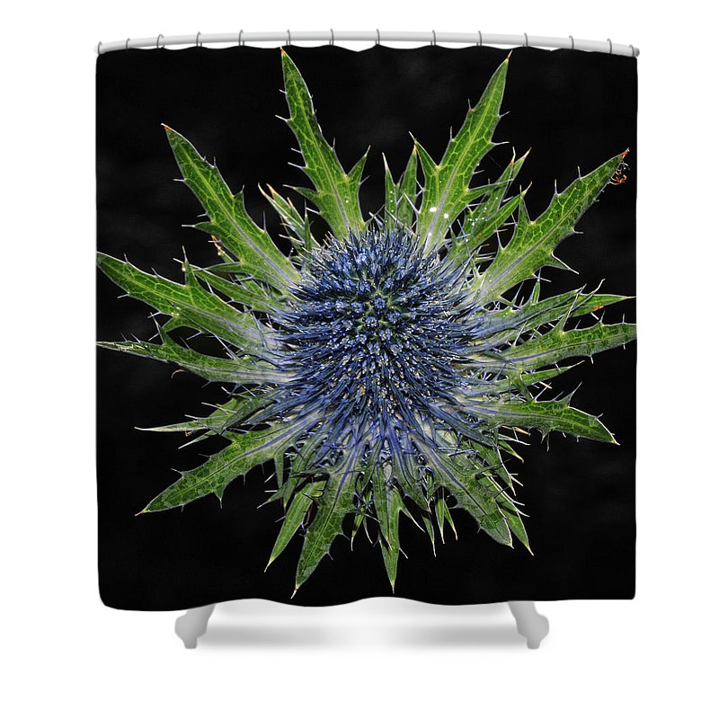 Insect Shower Curtain featuring the photograph Spider by Love Photography