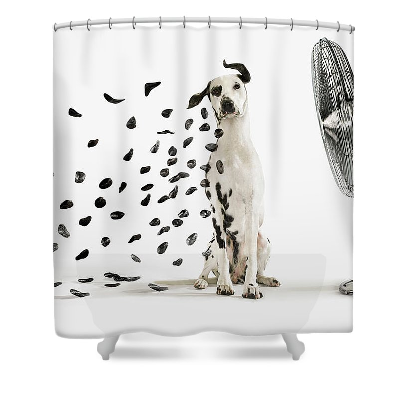 Pets Shower Curtain featuring the photograph Spots Flying Off Dalmation Dog by Gandee Vasan