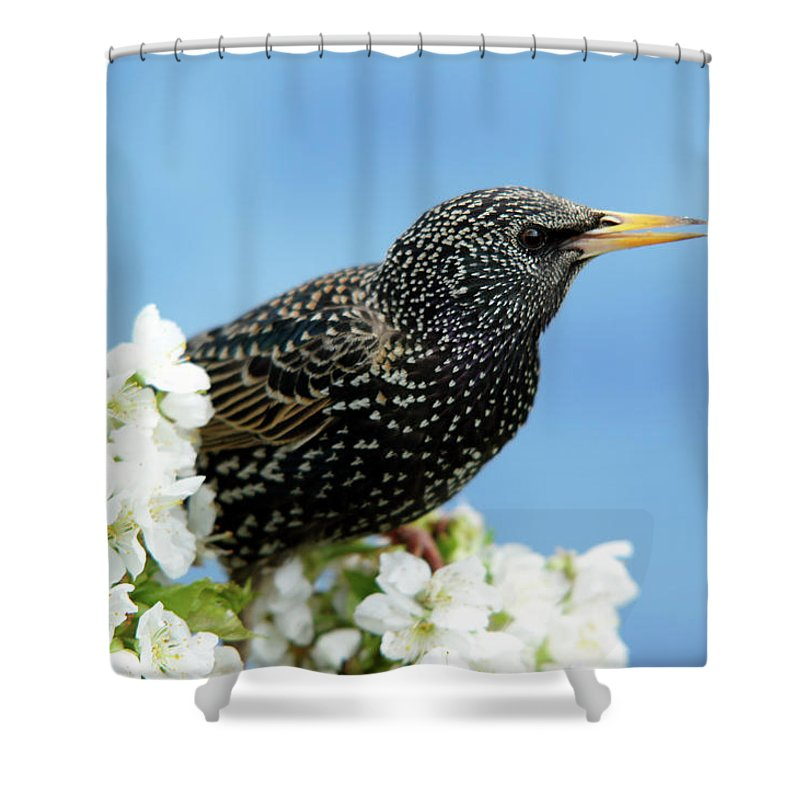 Songbird Shower Curtain featuring the photograph Star In Springtime by Schnuddel
