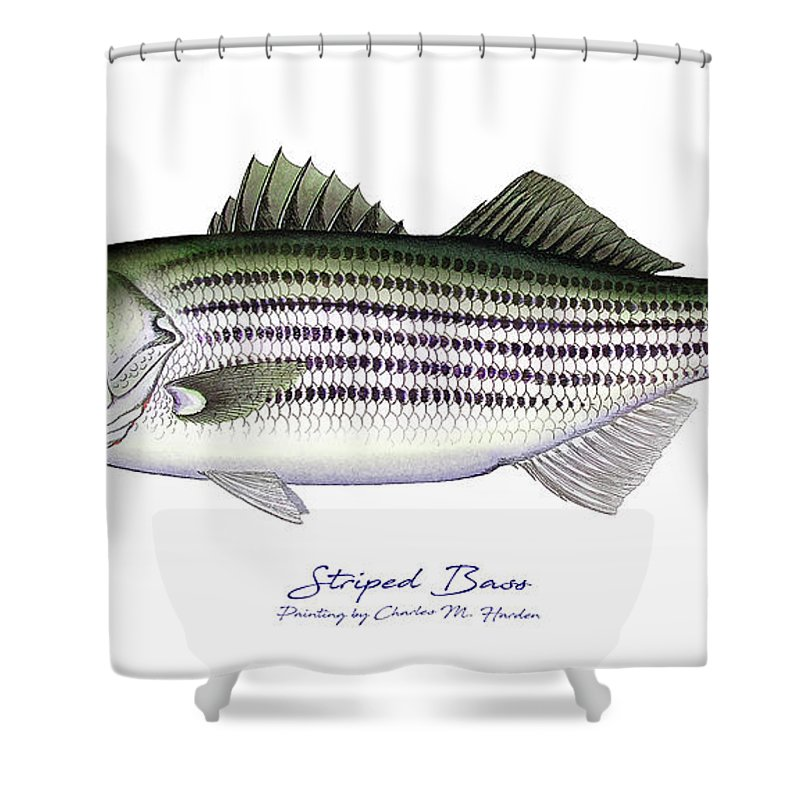 Striped Bass Art Shower Curtain featuring the painting Striped Bass by Charles Harden