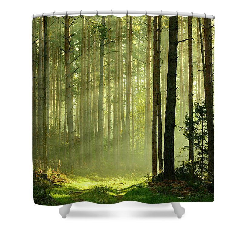 Scenics Shower Curtain featuring the photograph Sunbeams Breaking Through Pine Tree by Avtg