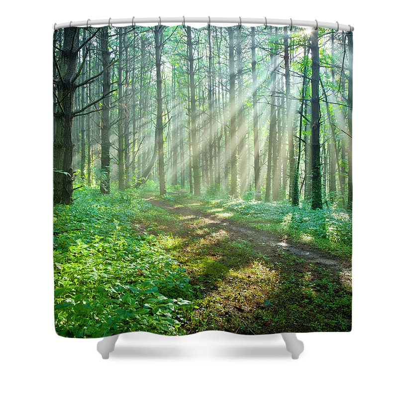 Outdoors Shower Curtain featuring the photograph Sunbeams Filtering Through Trees On A by Drnadig