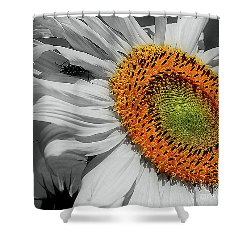 Sunflower Shower Curtain featuring the photograph Sunflower And Shy Friend by Smilin Eyes Treasures