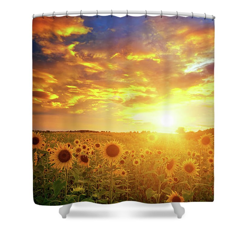 Scenics Shower Curtain featuring the photograph Sunflowers Field And Sunset Sky by Avalon studio