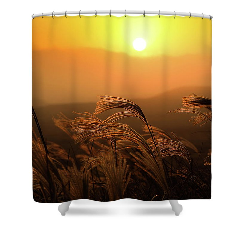 Tranquility Shower Curtain featuring the photograph Sunset, Reeds And Wind by Douglas Macdonald