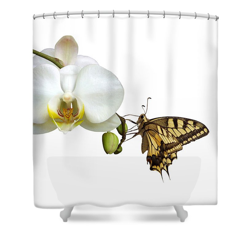 White Background Shower Curtain featuring the photograph Swallowtail On White Orchid by Photographerolympus