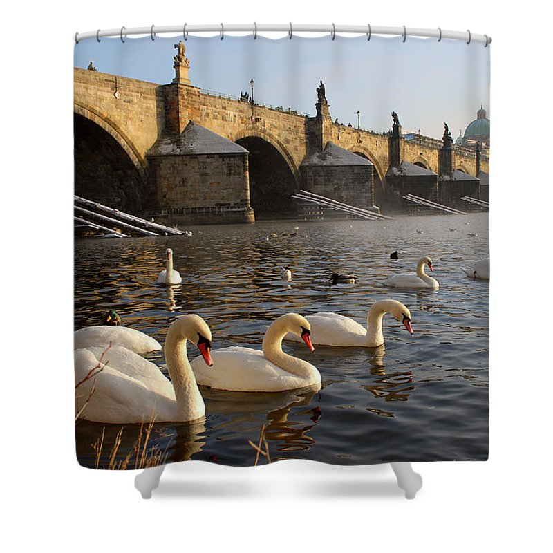 Arch Shower Curtain featuring the photograph Swans And Charles Bridge by Dibrova