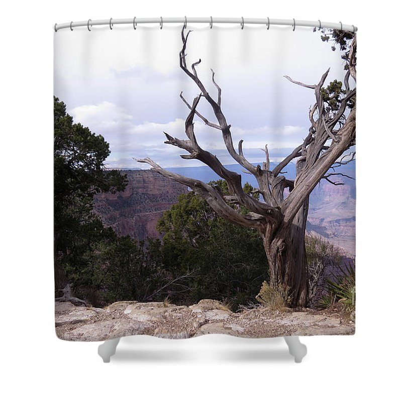 Twisted Shower Curtain featuring the photograph Swirly Tree by Mary Mikawoz