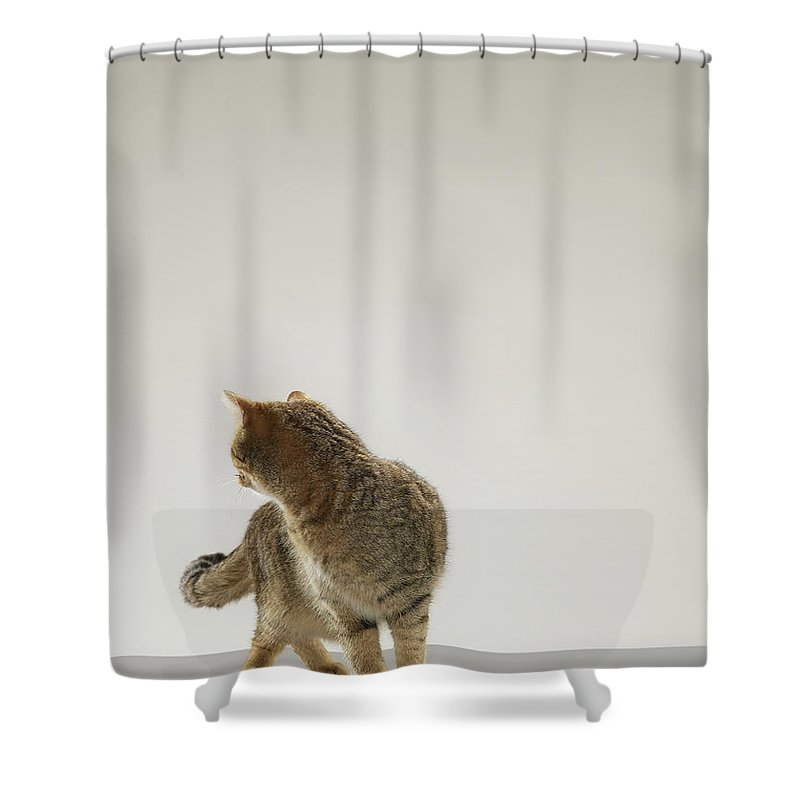 Pets Shower Curtain featuring the photograph Tabby Cat Looking Behind by Michael Blann