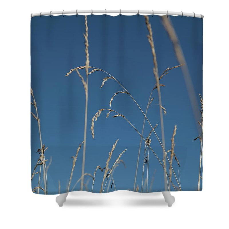 Tranquility Shower Curtain featuring the photograph Tall Grasses Swaying Against A Blue Sky by Lauren Krohn