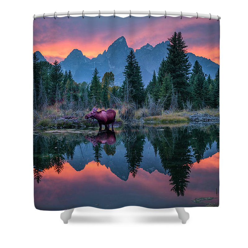 North America Shower Curtain featuring the photograph Teton Moose by Christian Heeb