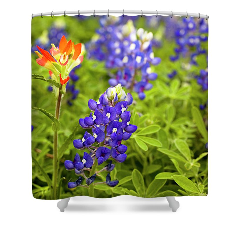 Orange Color Shower Curtain featuring the photograph Texas Bluebonnets In Spring Meadow by Fstop123