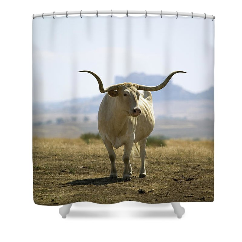 Horned Shower Curtain featuring the photograph Texas Longhorn by Joseph Sohm-visions Of America