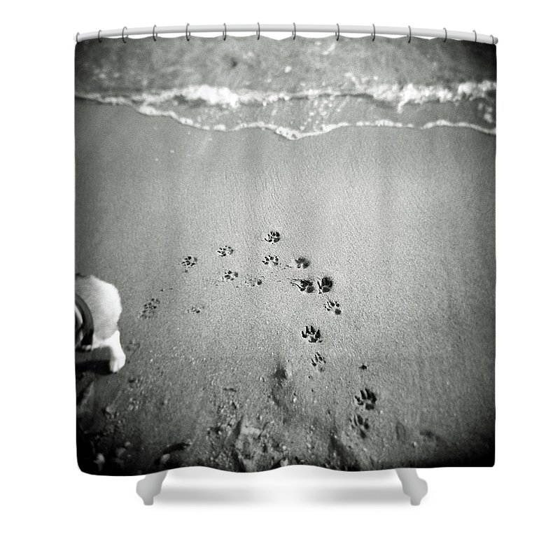 Pets Shower Curtain featuring the photograph The Beach by Moaan