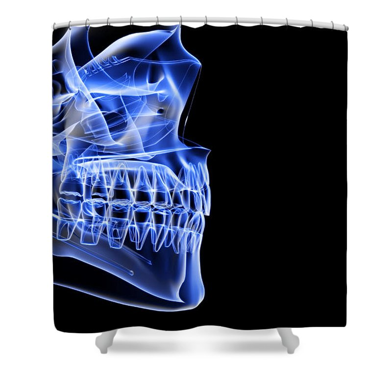 Anatomy Shower Curtain featuring the digital art The Bones Of The Jaw by Medicalrf.com