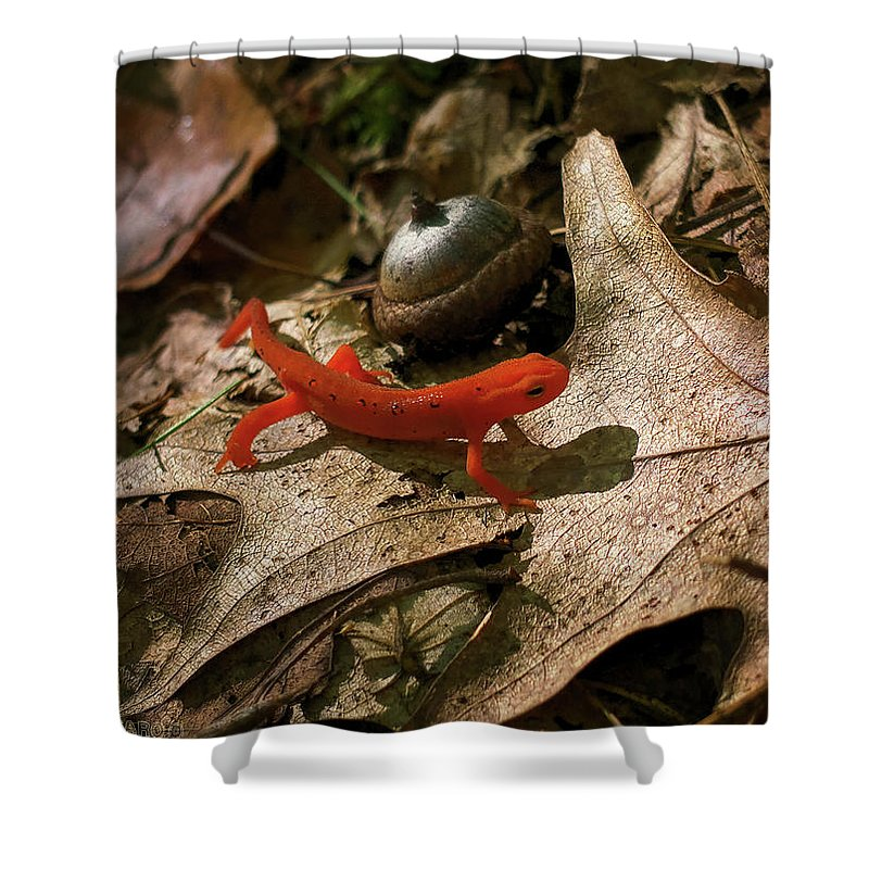 Acorn Shower Curtain featuring the photograph The Efts Progress by Jerry LoFaro