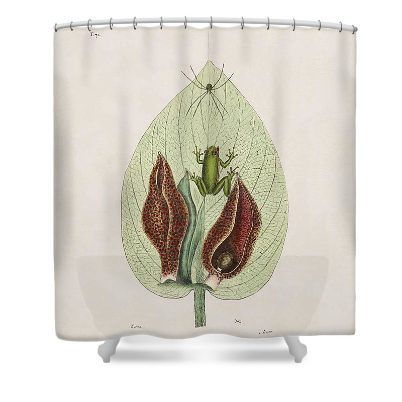 Mark Catesby Shower Curtain featuring the painting The Green Tree Frog And The Skunk Weed The Natural History Of Car by Mark Catesby