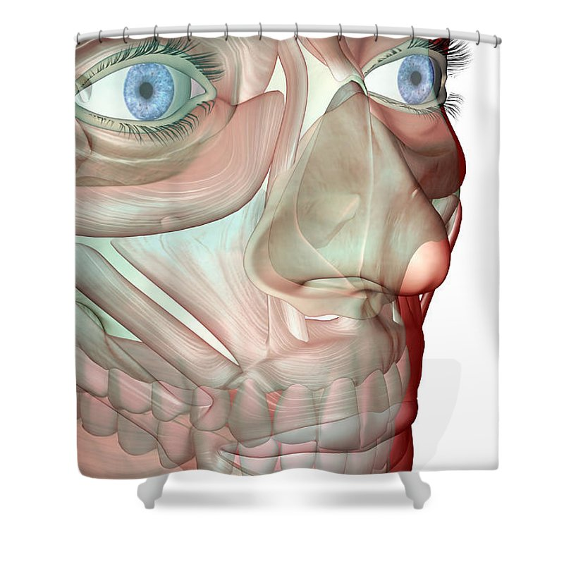 White Background Shower Curtain featuring the digital art The Musculoskeleton Of The Face by Medicalrf.com