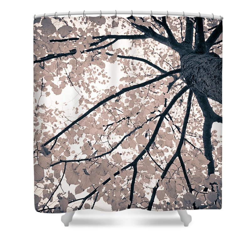 Spray Shower Curtain featuring the photograph Tree Branches by Gianlucabartoli