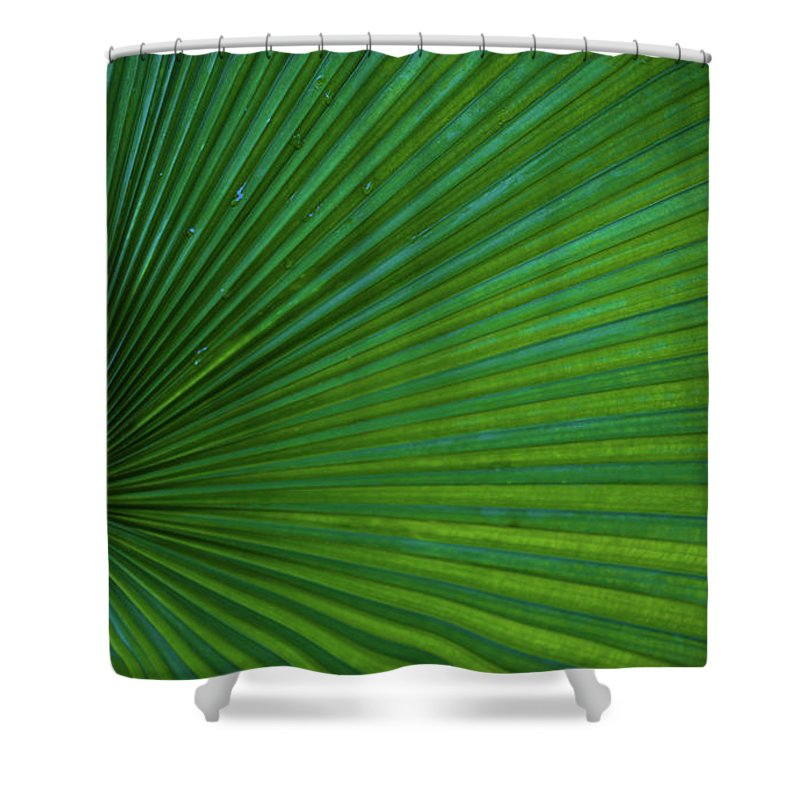 Tropical Shower Curtain featuring the photograph Tropical Leaf by Emily Johnson