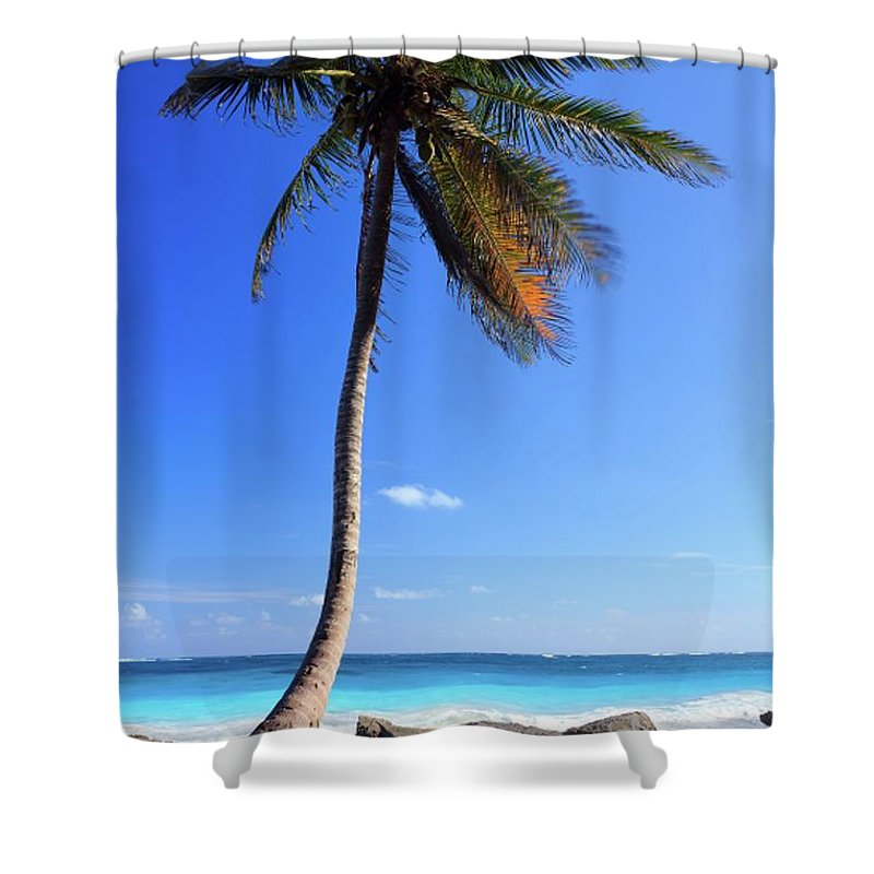 Scenics Shower Curtain featuring the photograph Tulum Mexico Single Tree On Beach by Maria Swärd