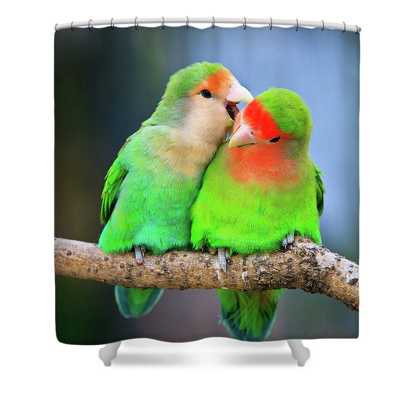 Togetherness Shower Curtain featuring the photograph Two Peace-faced Lovebird by Feng Wei Photography