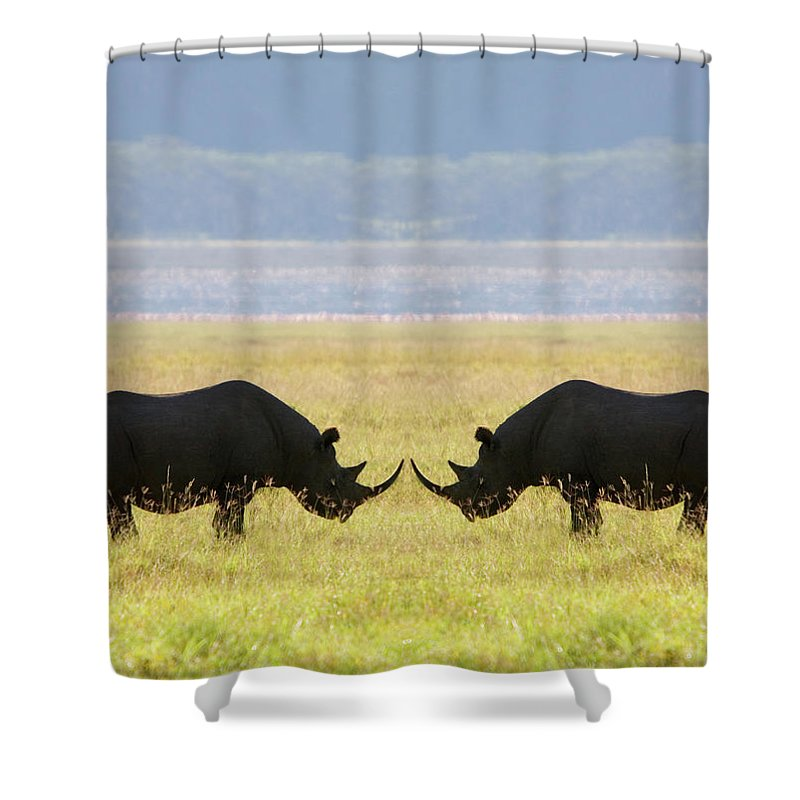 Animal Themes Shower Curtain featuring the photograph Two White Rhinoceros Face To Face On by Grant Faint